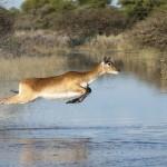 Botswana_Low_iStock_000013037973_Large