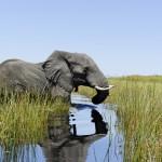 Botswana_Mid_iStock_000020379296_Full
